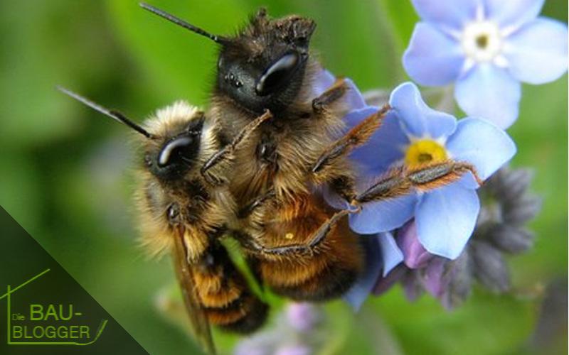 Wildbienen im Rollrasen