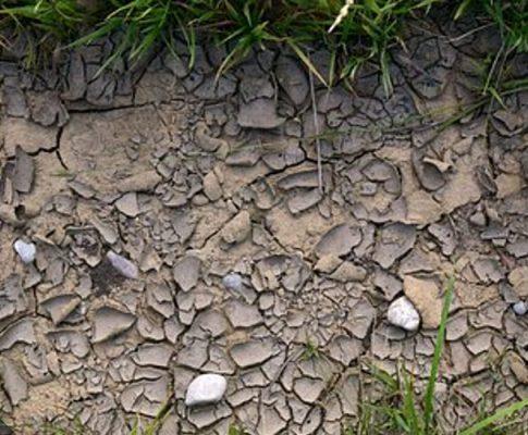 Regenwassernutzung: Für Garten und Waschmaschine?
